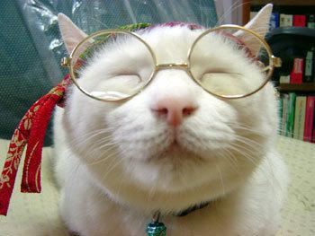 megane-cat.jpg